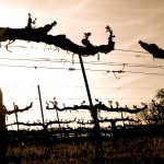 Vigilance Winery  and Vineyards