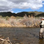 Fighting the Brown Trout