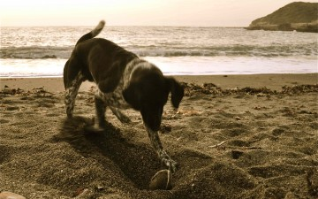 California's Central Coast: A Dogcation Destination