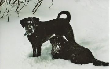 Powderhounds in the Night // Visit Mammoth Insider Blog