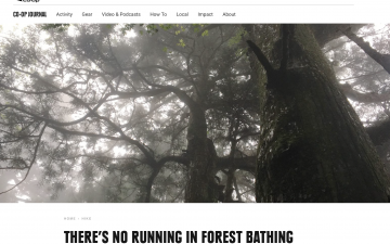 There's No Running in Forest Bathing // REI Co-op Journal